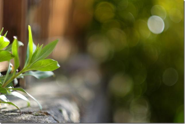 Fujifilm XF 56mm @1.2 - wall weed