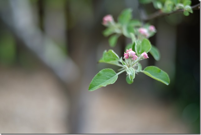 Leica Summilux @1.4 - flower buds
